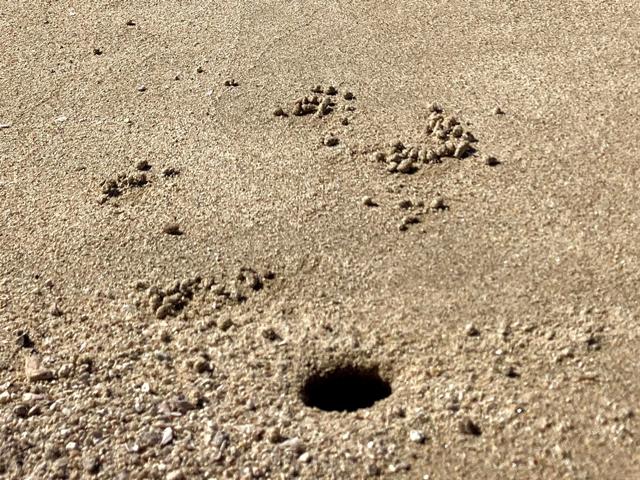 カニの穴の写真