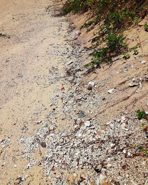 砂丘手前の発泡スチロールの写真