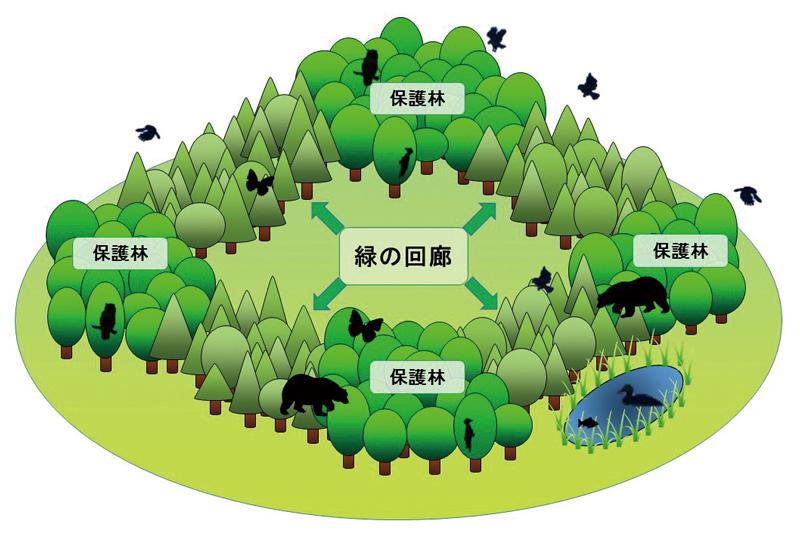 緑の回廊をイメージした画像