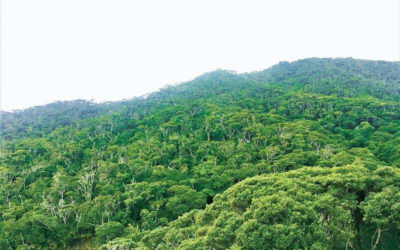 やんばるの森の写真